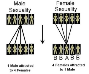 Hypergamy Chart